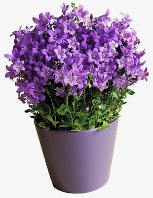 Purple Flower Pot PNG