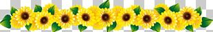 Common Sunflower Stock Photography PNG