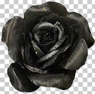 Rose Flower Black Color Ivory PNG