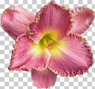 Petal Cut Flowers Pink M PNG