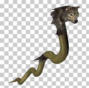 Tail Fauna PNG
