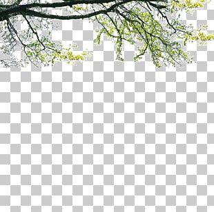 Tree Poster Landscape PNG