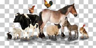 Farm Sheep Livestock Animal Nutsdier PNG