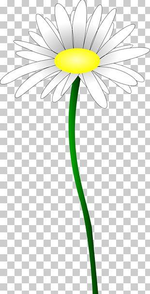 Daisy Family Oxeye Daisy Common Daisy Flower Yellow PNG