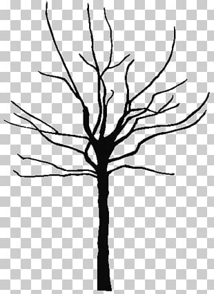 Tree Oak Black And White PNG