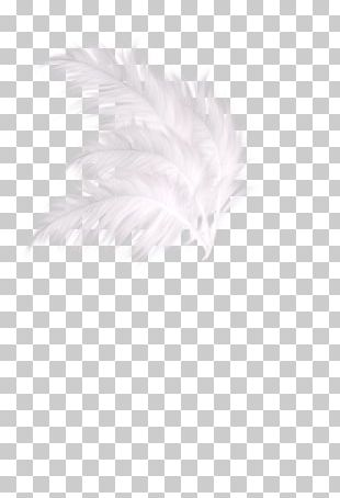 White Textile Feather Pattern PNG