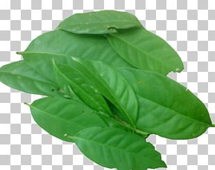 Indonesian Bay Leaf Herb Spice Condiment PNG
