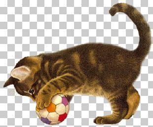 Cat Kitten Dog Animal PNG