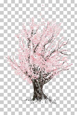 Cherry Blossom Drawing Sketch PNG
