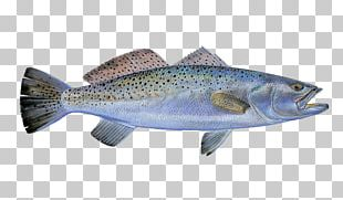 Coho Salmon Trout Fish Products Cod Fishing PNG