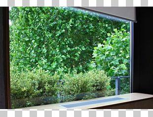 Tree Property Interior Design Services Grasses Shrub PNG