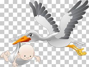 White Stork Bird Infant PNG