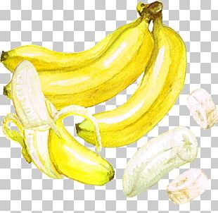 Beer Banana Watercolor Painting PNG