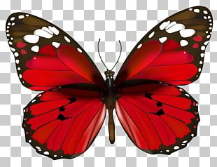 Butterfly Red PNG