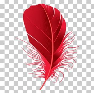 Feather Red PNG