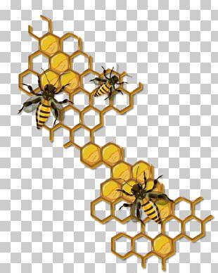Honey Bee Hornet Beehive PNG