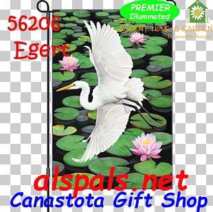 Heron Bird Egret Beak Feather PNG