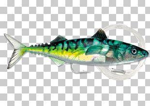 Oily Fish Mackerel Herring Sardine PNG