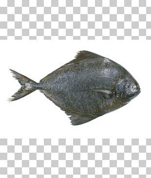Pampus Argenteus Sole Black Pomfret Fish PNG