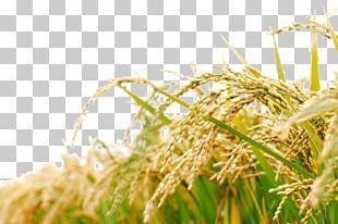 Rice Bran Oil Japanese Cuisine Food PNG
