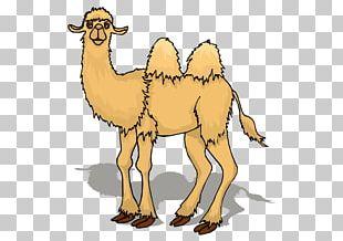 Camel Animation Cartoon PNG
