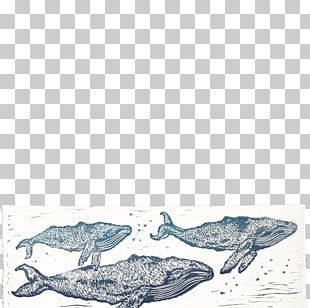 Marine Mammal Dolphin Wind Wave Drawing PNG