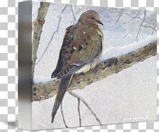 Hawk Fauna Wood Beak American Sparrows PNG