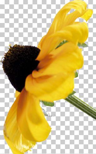 Petal Close-up Flowering Plant Plant Stem PNG