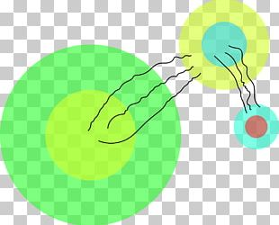Tennis Balls Riesz Transform Organism Product Design PNG