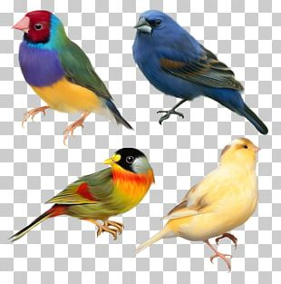 Domestic Canary Bird Finch Sparrow PNG