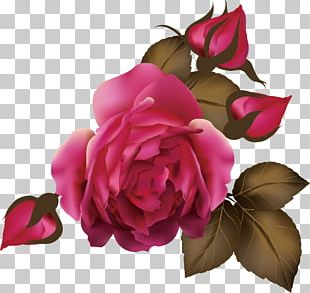 Flores (Flowers) Rose Euclidean PNG
