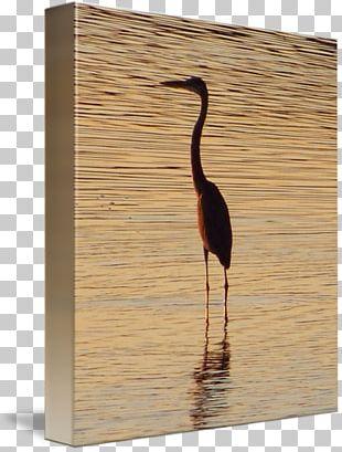 Water Bird Wood /m/083vt PNG