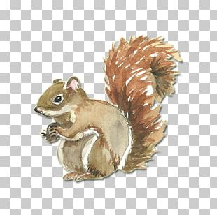 Squirrel Watercolor Painting CorelDRAW PNG