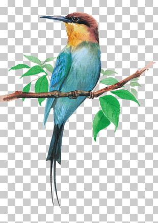 Bird Dog Watercolor Painting Cartoon Illustration PNG