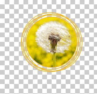 Honey Bee Common Dandelion Seed Pollen Liver PNG