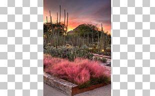 Desert Botanical Garden Scottsdale Tempe Sedona Grand Falls PNG