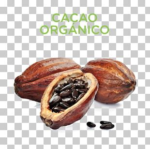 Hot Chocolate Cacao Tree Cocoa Bean Cocoa Solids PNG