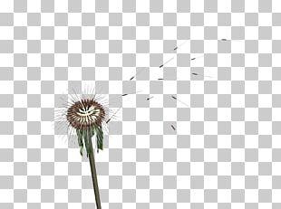 Flower Petal Plant Stem Desktop Close-up PNG