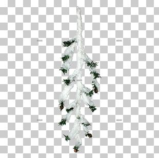 Spruce Christmas Ornament Christmas Tree Fir Pine PNG