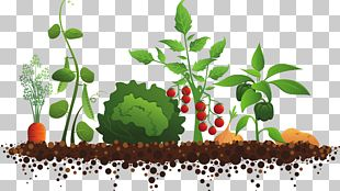 Sensory Garden Community Gardening PNG