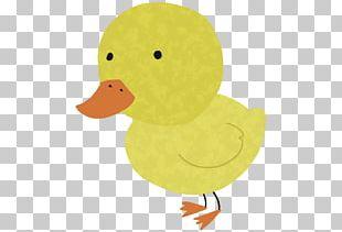 Domestic Duck Bird Cartoon Illustration PNG