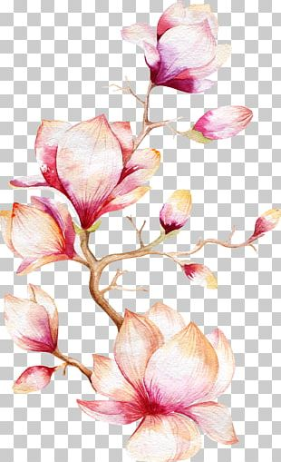 Watercolor Painting Magnolia Flower PNG