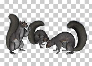 Squirrel Cartoon Carnivora Terrestrial Animal Tail PNG