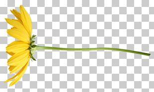 Flower Tulip Petal PNG
