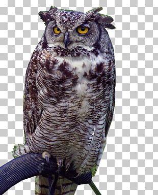Great Grey Owl Bird Duck Beak PNG