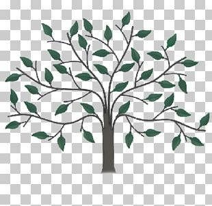 Drawer Pull Cabinetry Wall Decal Tree PNG
