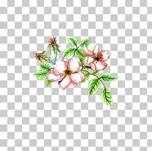 Flower Stock Photography Watercolor Painting Illustration PNG