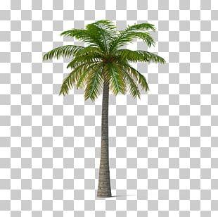 Adonidia Veitchia Coconut Tree PNG