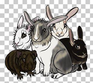 Netherland Dwarf Rabbit English Spot Californian Rabbit Domestic Rabbit Hare PNG