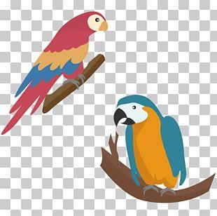Parrot Touch Fruit : Preschool Game Simple Game For Kids Diamant Koninkrijk Koninkrijk PNG
